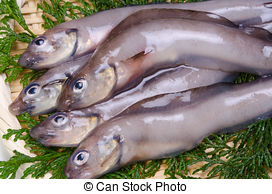 Picture of eelpout.