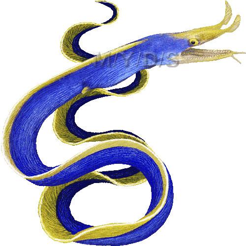 Blue Ribbon Eel, Bernis eel clipart graphics (Free clip art.