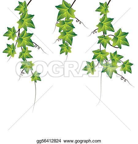 Ivy Clip Art.