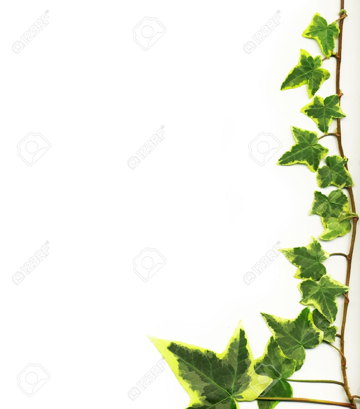 Vines Wall Background Stock Photos Images. 8,190 Royalty Free.