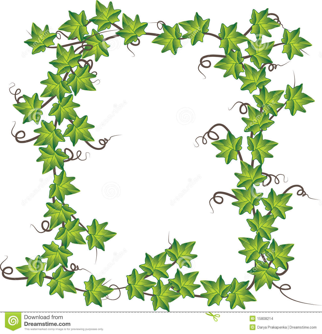 Green Ivy . Vector Illustration Stock Images.