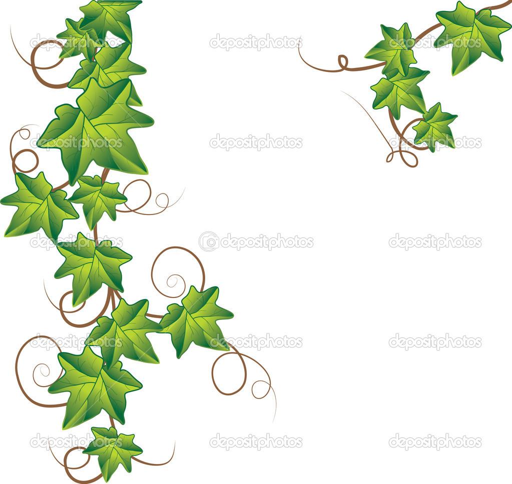 Green ivy. Vector Illustration — Stock Vector © shekoru #2954356.