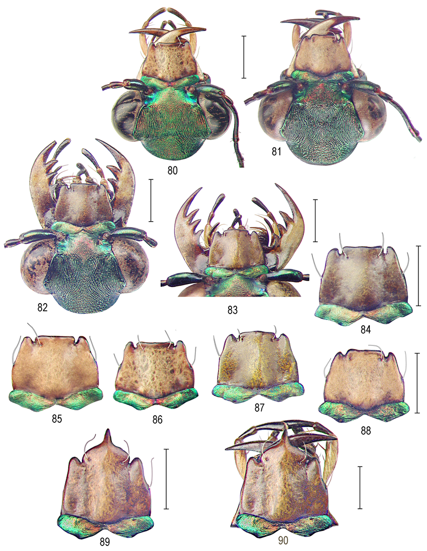 Taxonomic and nomenclatorial revision within the Neotropical.
