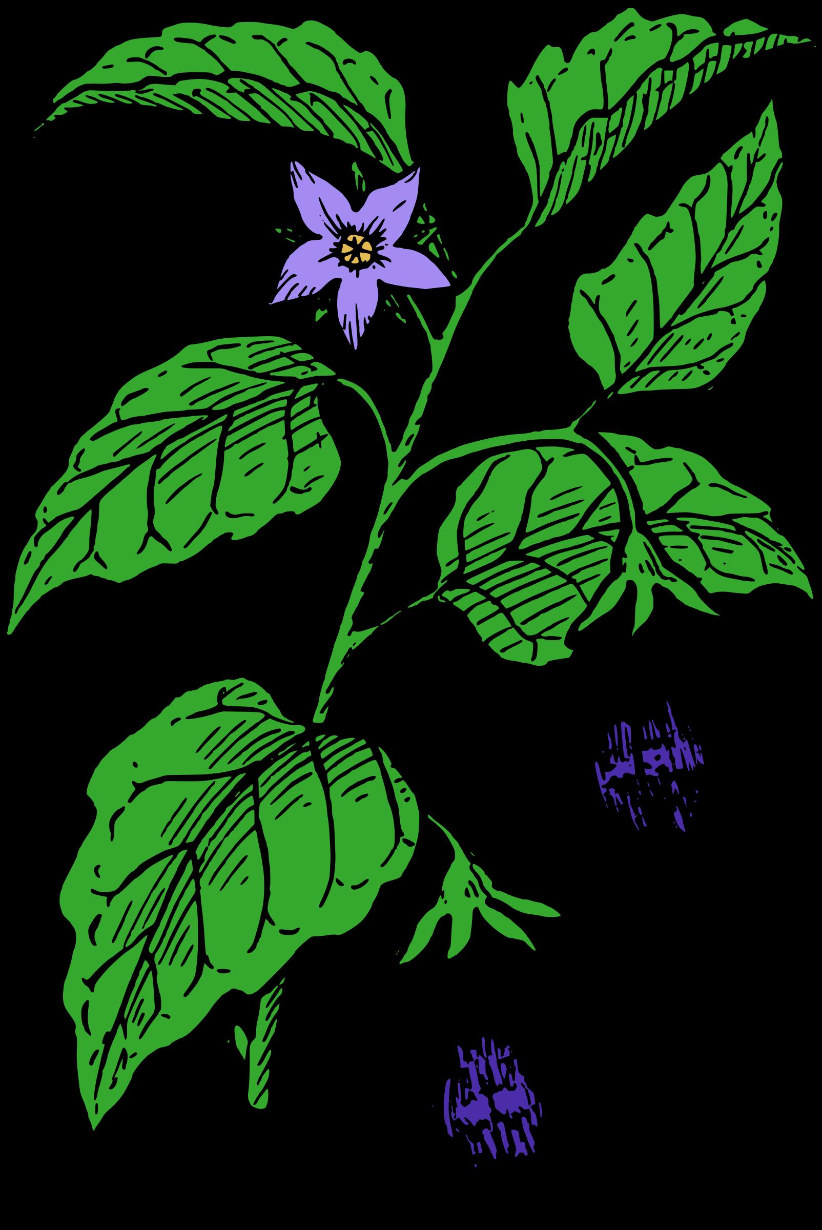 Eggplant plant clipart.
