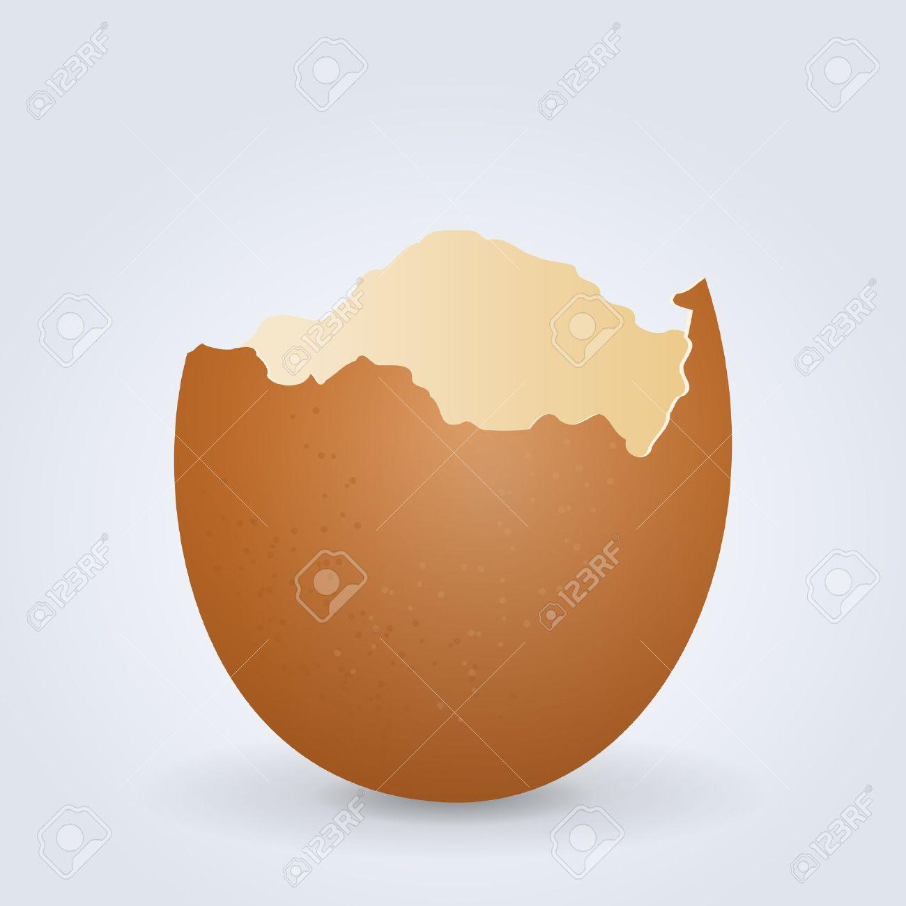 4,102 Eggshell Stock Vector Illustration And Royalty Free Eggshell.