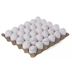 Egg In Tray.