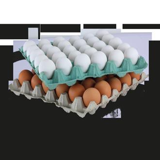 Egg Trays.