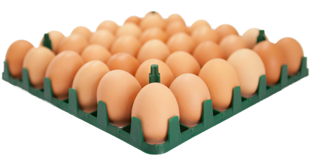 Download 36 Egg Tray.