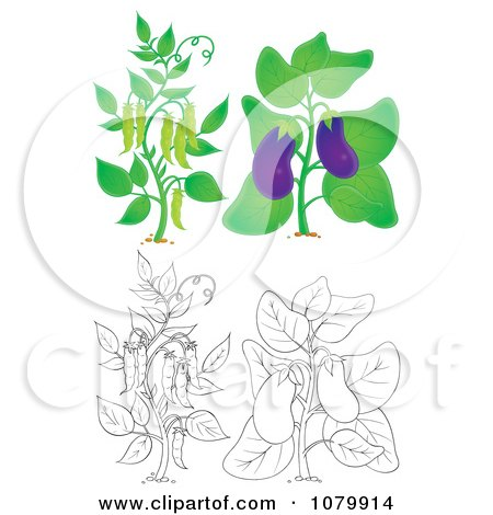 Clipart Eggplant And Pea Plants In Color And Outline.
