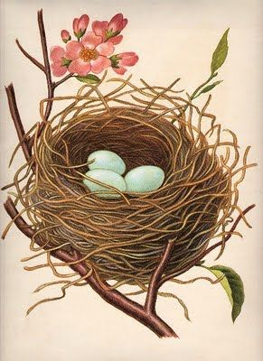 Nest w/Robin\'s Eggs.