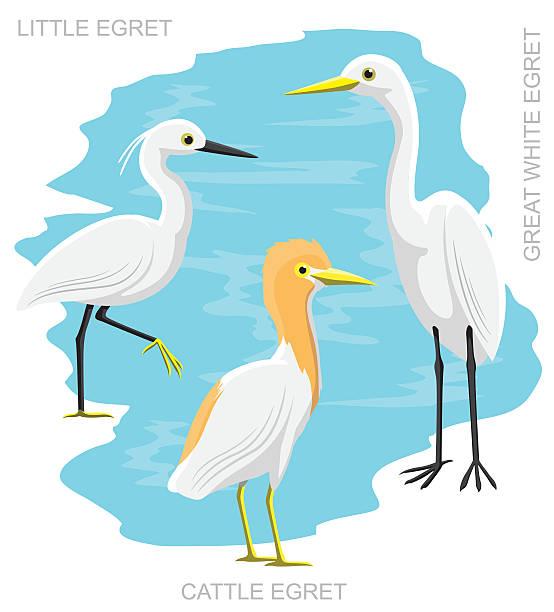 Great Egret Illustrations, Royalty.