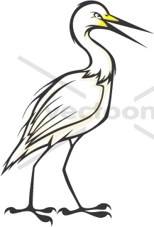 Serious Great Egret.