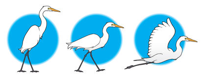 Egret Stock Illustrations.