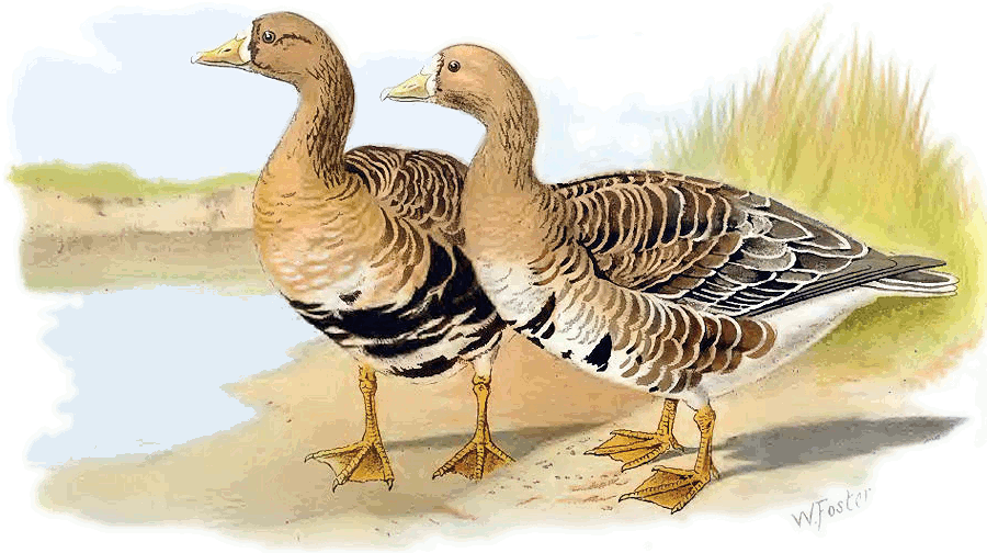 Geese Clip Art Download.