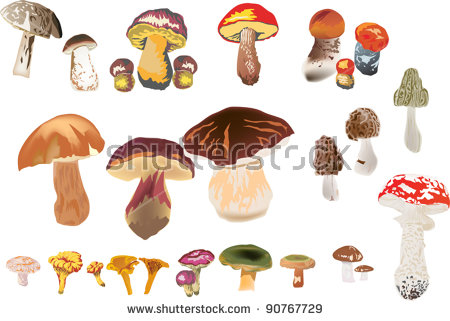 Watercolor Illustrations Mushrooms Stockillustration 324101018.
