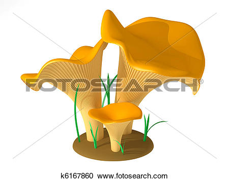 Stock Illustrations of Chanterelle k6167860.