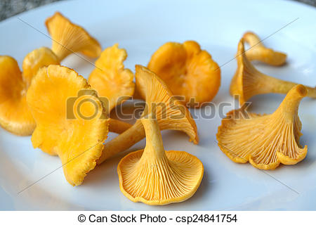 Stock Images of chanterelle mushrooms on a plate.