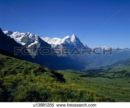 Stock Image of Eiger, Grindelwald, Bern, Switzerland u13981255.