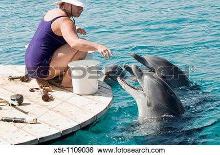 Stock Images of Israel, Eilat, Dolphin Reef Beach, Common.