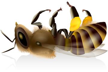 Photos, illustrations et vidéos de varroa.