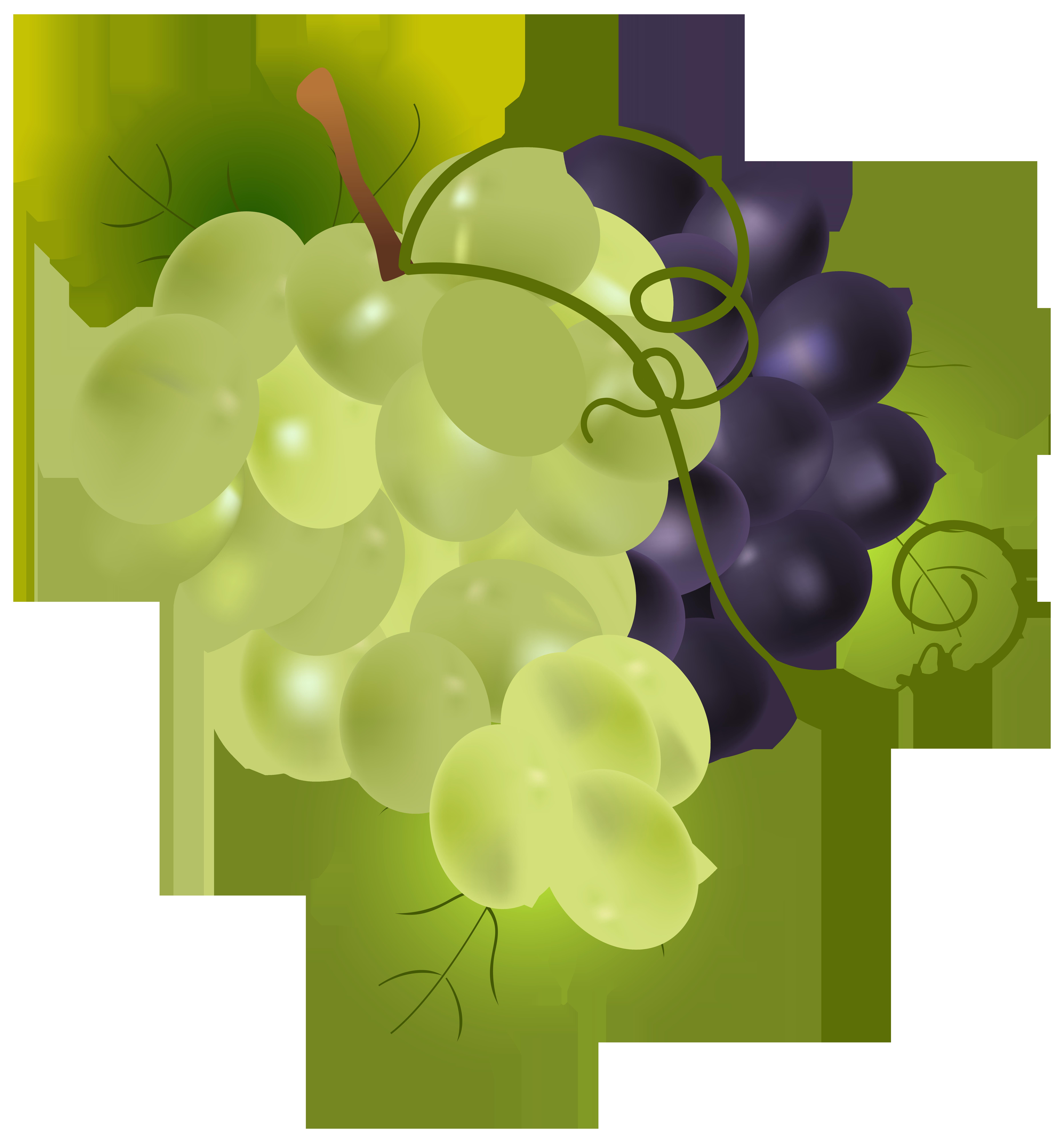 Grapes PNG Clip Art Image.