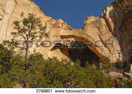 Stock Photography of Trees in front of natural arch, Facade of.