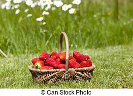 Picture of Hidden Elaeagnaceae berries.