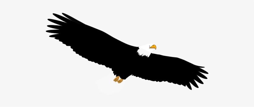 Gambar Burung Elang Png.