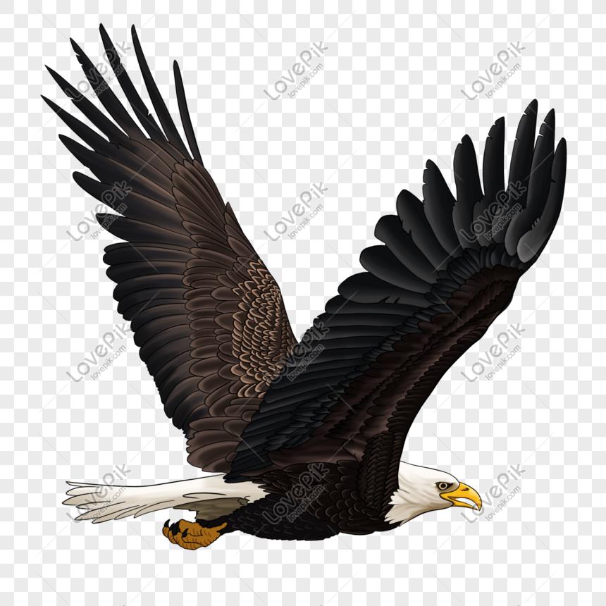 gambar elang bersayap elang gratis png bahan lapisan transparan.