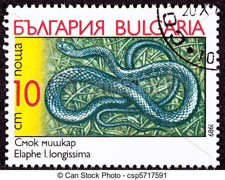 Clipart of Aesculapian Rat Snake, Elaphe longissima also known as.