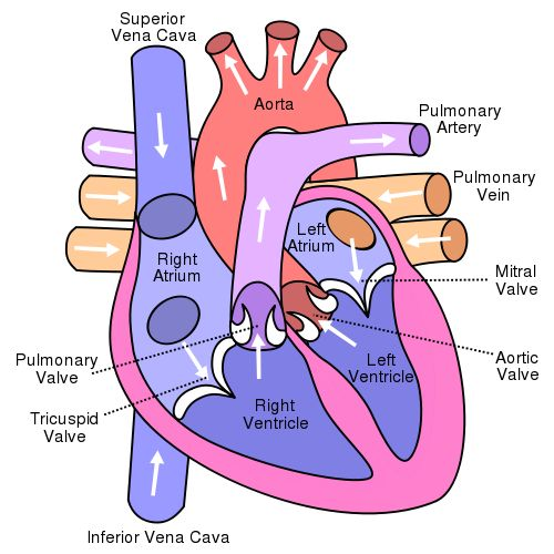 Myocardial infarction atrial fibrillation congestive heart failure.