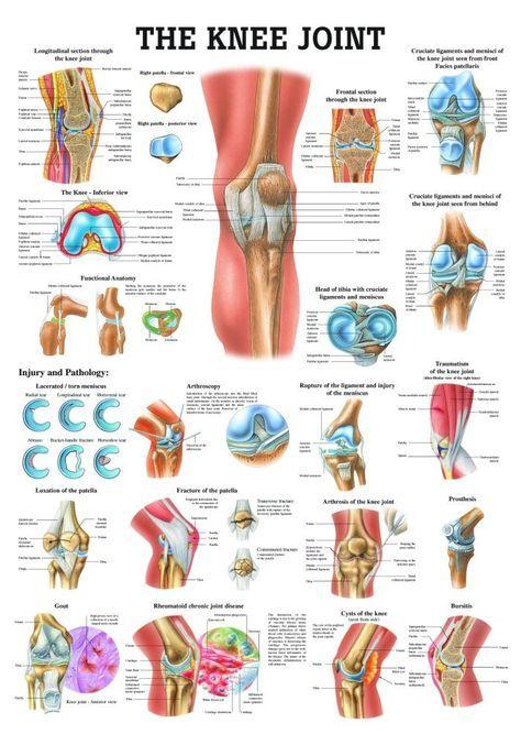 1000+ ideas about Knee Joint Anatomy on Pinterest.
