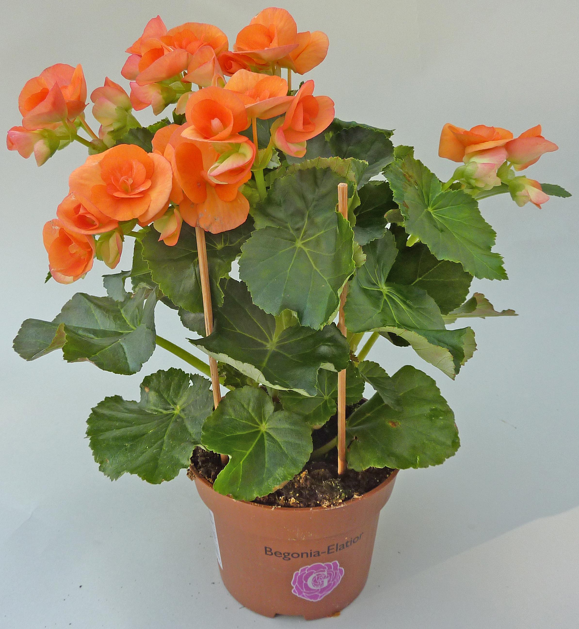 1000+ images about Level 2 plants on Pinterest.