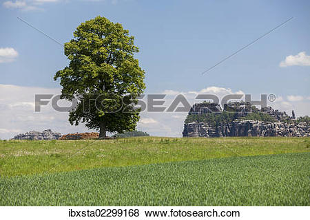 "Pictures of ""Landscape with a tree near the Schrammsteine rock."