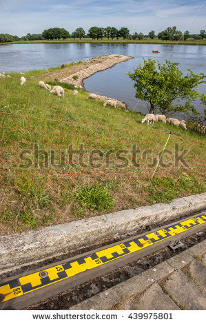Sheep Front Grazing Stock Photos, Royalty.