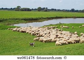 Sheep river Stock Photo Images. 1,199 sheep river royalty free.