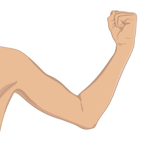 Best Elbow Clip Art Illustrations, Royalty.