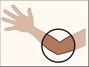 Clip Art: Parts of the Body: Elbow Color Unlabeled I abcteach.com.
