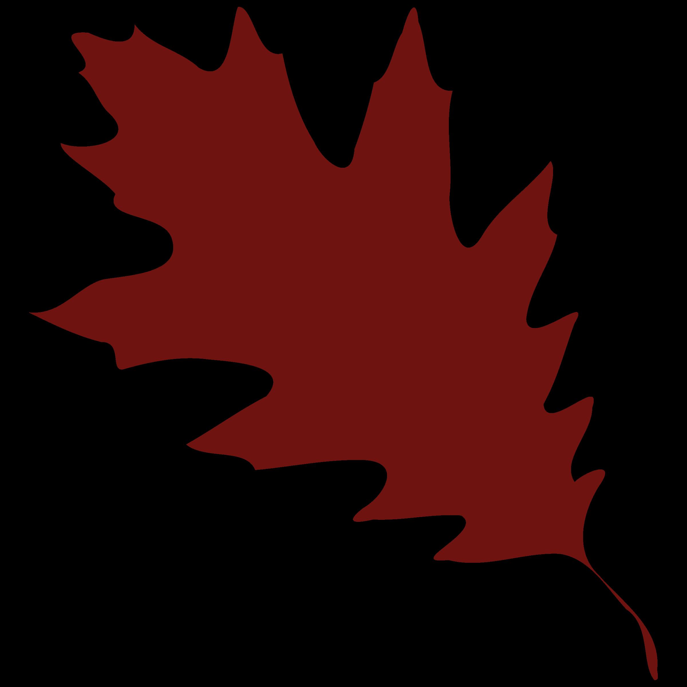 Silhouette Of A Leaf.