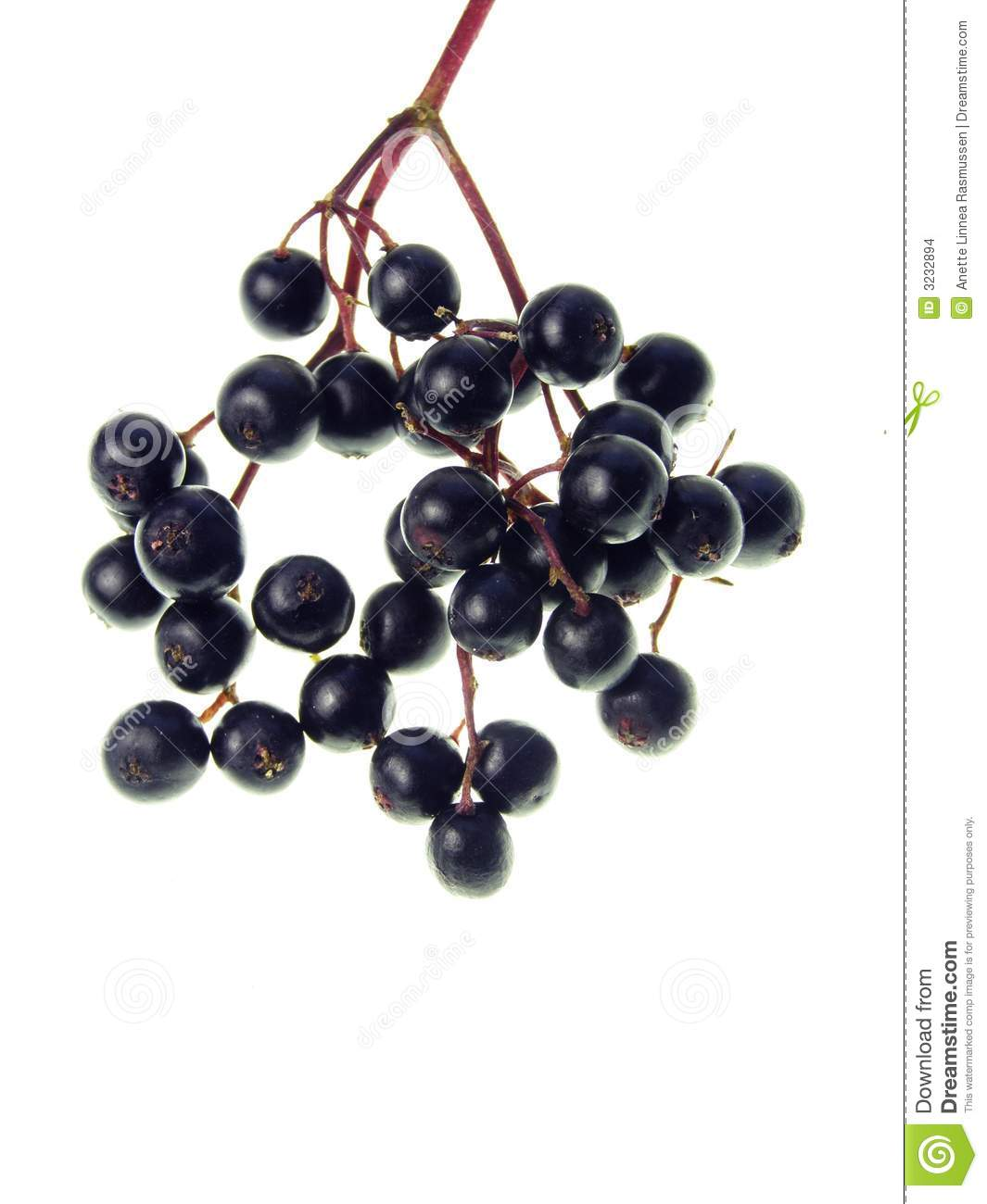 Elderberry Stock Images.