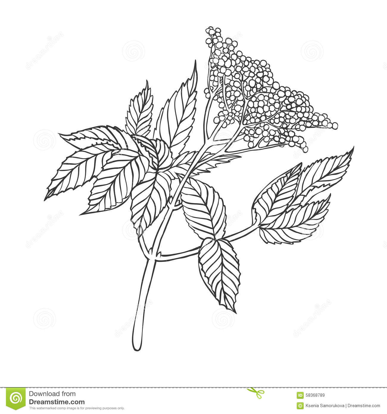 Elderberry tree black and white clipart.
