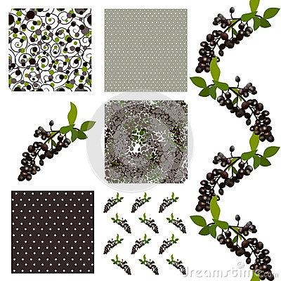 Elderberries Stock Illustrations.