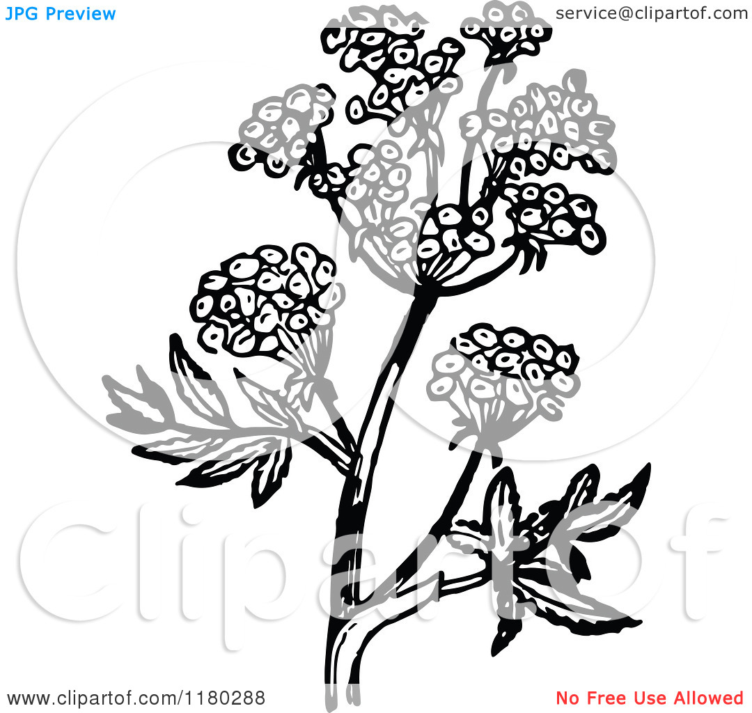 Clipart of a Retro Vintage Black and White Flowering Plant 2.