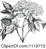 Clipart of a Vintage Black and White Sig with Flower Characters.