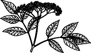 Elderberry Clip Art at Clker.com.