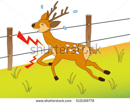 Electric Fence Animals Stock Photos, Royalty.