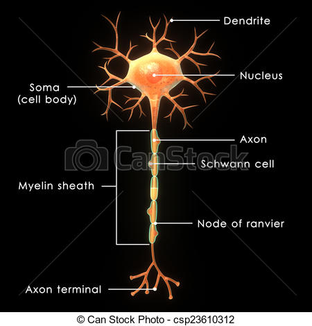 Clipart of Neuron.