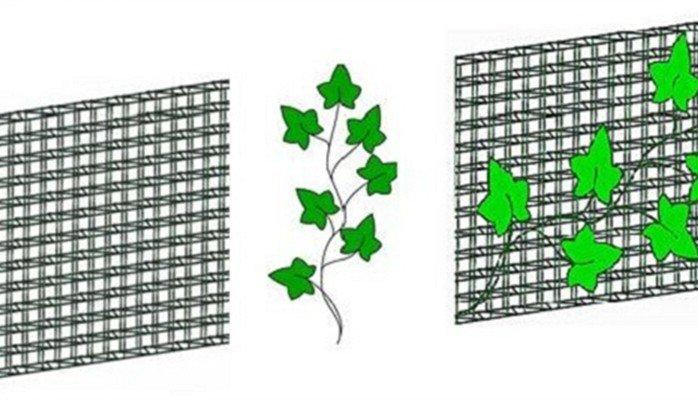 Landscape and Vertical Garden Trellis Mesh.