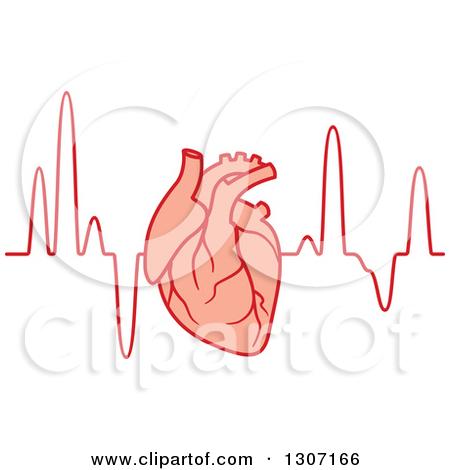 Clipart of a Human Heart over an Electrocardiogram Graph.