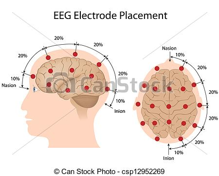 Clip Art Vector of EEG electrode placement, eps10.